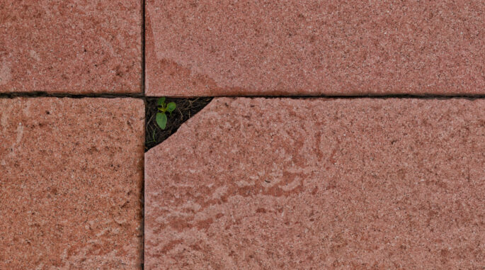 small plant which is between the paving slabs